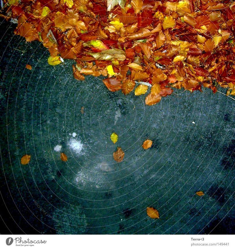 fall down Blatt fallen mehrfarbig orange rot braun gelb Wärme Herbst Jahreszeiten Straße Asphalt Teer blau schwarz grau Bremsspur Reifen Spuren Fleck weiß