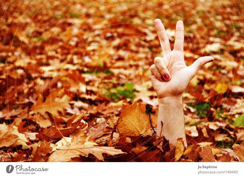 3-2-1, ich komme! Hand Blatt Herbst außergewöhnlich verrückt Kommunizieren Finger Jahreszeiten verstecken zeigen skurril Herbstlaub bizarr trashig Herbstfärbung