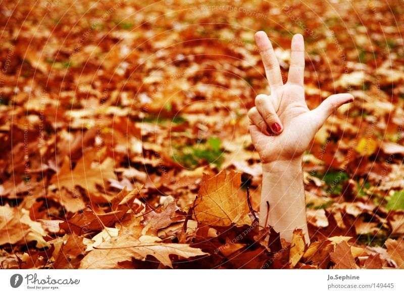 3-2-1, ich komme! Hand Blatt Herbst außergewöhnlich verrückt Kommunizieren Finger Jahreszeiten verstecken zeigen skurril Herbstlaub bizarr trashig Herbstfärbung Schrecken