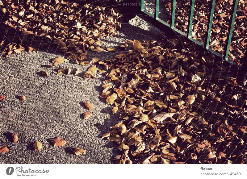 Vergessen Blatt Herbstlaub mehrfarbig Oktober November September gelb Herbstfärbung Ahornblatt Baum Haufen Anhäufung Hintergrundbild Jahreszeiten herbstlich