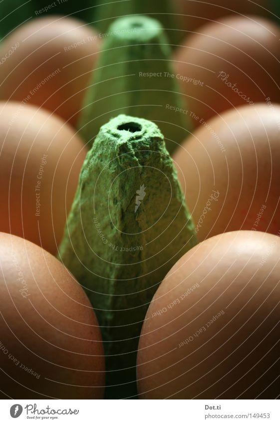 und samstags auch mal drei grün braun Lebensmittel frisch Ernährung lecker Tiefenschärfe Ei Karton Bioprodukte Handel ökologisch tierisch 6 Symmetrie Haushalt