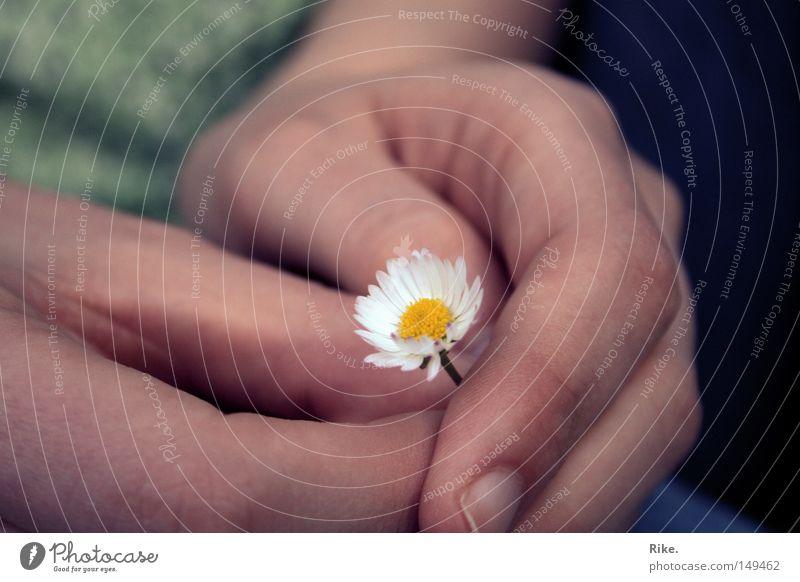 Abschied vom Sommer. Natur Hand grün Pflanze Freude Blume gelb Umwelt Gefühle klein Blüte Frühling Finger Hoffnung Zusammenhalt