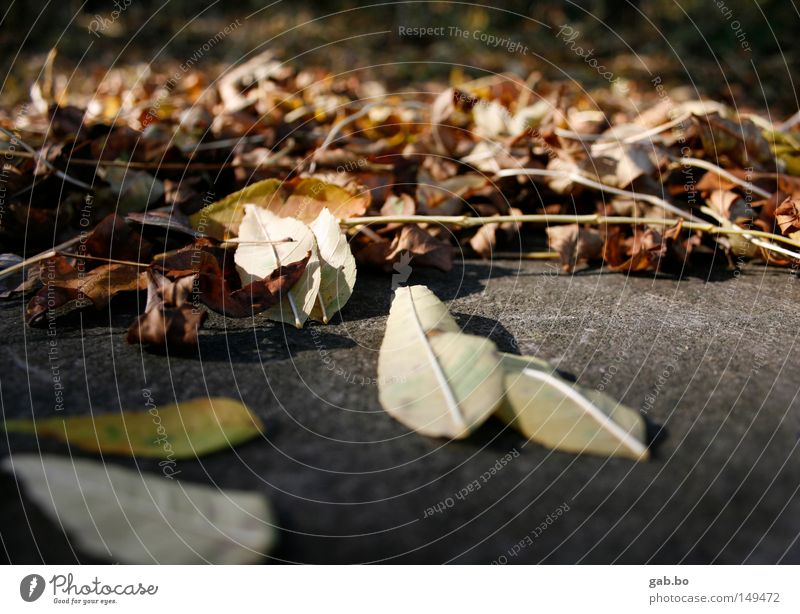 blätter.wald Natur Baum rot Blatt Landschaft kalt Wärme Herbst Stein niedlich Idylle trocken Jahreszeiten Tiefenschärfe Dynamik vertrocknet