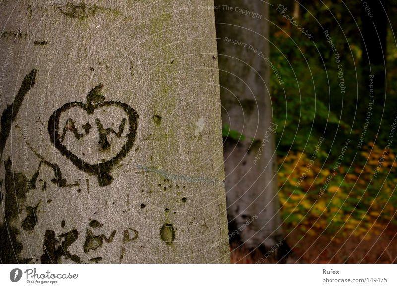 A + W = BF Natur Baum Blatt Liebe Wald Herbst Gefühle Glück Beginn frei authentisch einzigartig Vertrauen Zeichen Vergangenheit Schönes Wetter