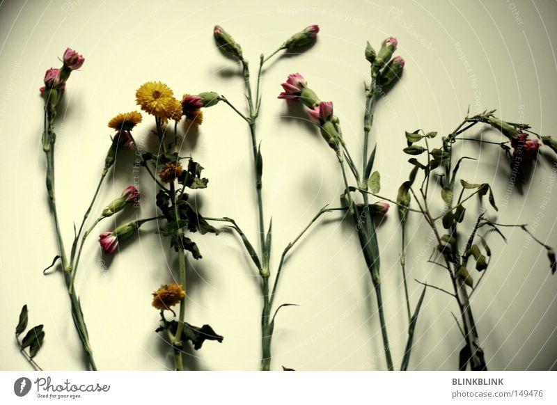 sterbende nelken Tod Sensenmann Nelkengewächse Blume Blumenstrauß welk Pflanze Stengel grün grau schwarz Beerdigung Dekoration & Verzierung Wohnung Winter