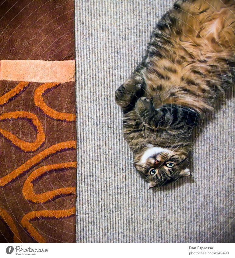 Tigerstyle Katze Hauskatze Teppich Boden Haustier Fell liegen Tier Tigerkatze weich kuschlig Kuscheln Pfote kratzen gemütlich Muster Schnurren niedlich süß