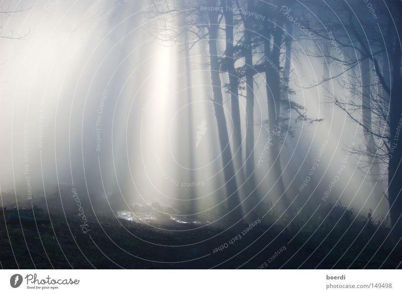 the mIst III Natur Baum ruhig schwarz Wald dunkel kalt Herbst grau Landschaft Nebel Licht trist gruselig feucht mystisch