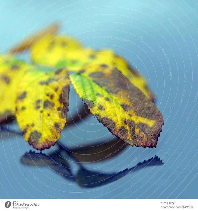 autumn reflection Herbst Blatt Baum gold gelb grün Natur Strukturen & Formen Hintergrundbild Park Makroaufnahme Nahaufnahme