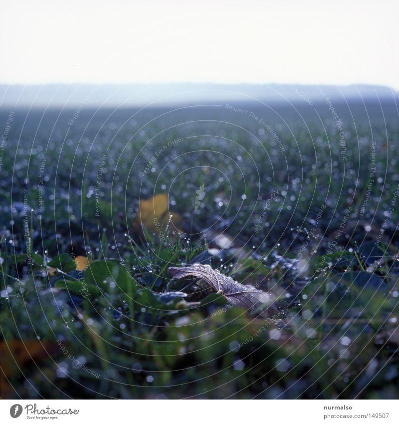 Herbst geht, Winter kommt . . . Feld Blatt Mecklenburg-Vorpommern Landwirtschaft Horizont frei Sauberkeit nass Gras Ferne Nebel Heimat Wohnung Zone kalt