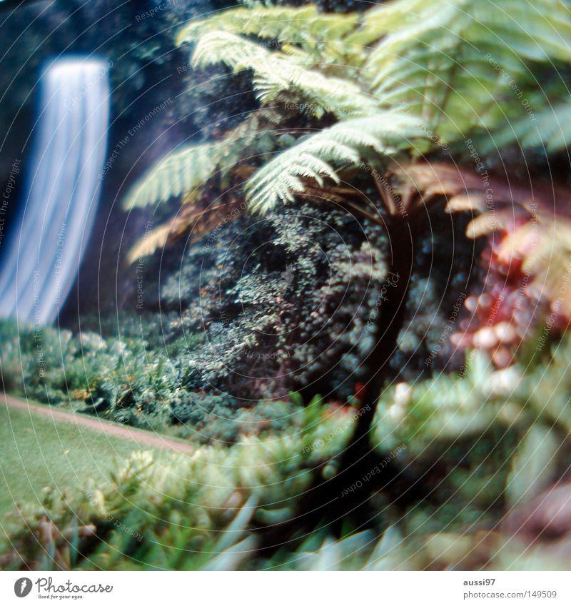 Stick to the river Idylle Urwald Schwüle Australien Fluss Bach Wasserfall Paradies Unschärfe Neigung