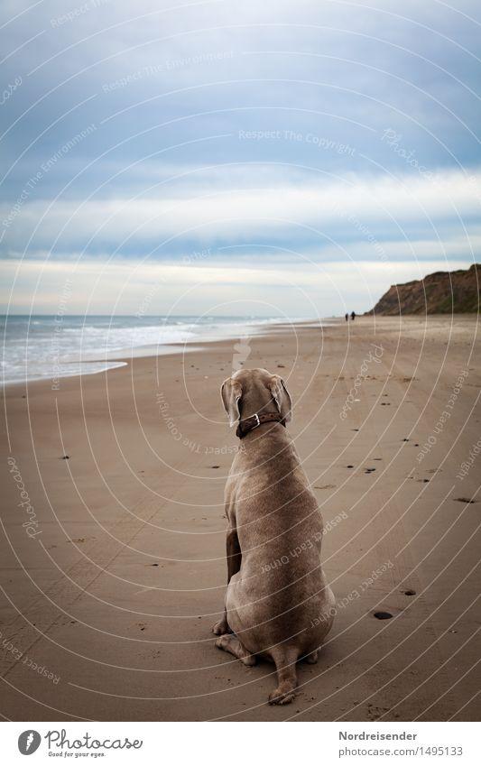 Warten.... Ferien & Urlaub & Reisen Ferne Meer Natur Landschaft Küste Strand Nordsee Tier Haustier Hund 1 sitzen warten blau braun Tierliebe Treue Verantwortung
