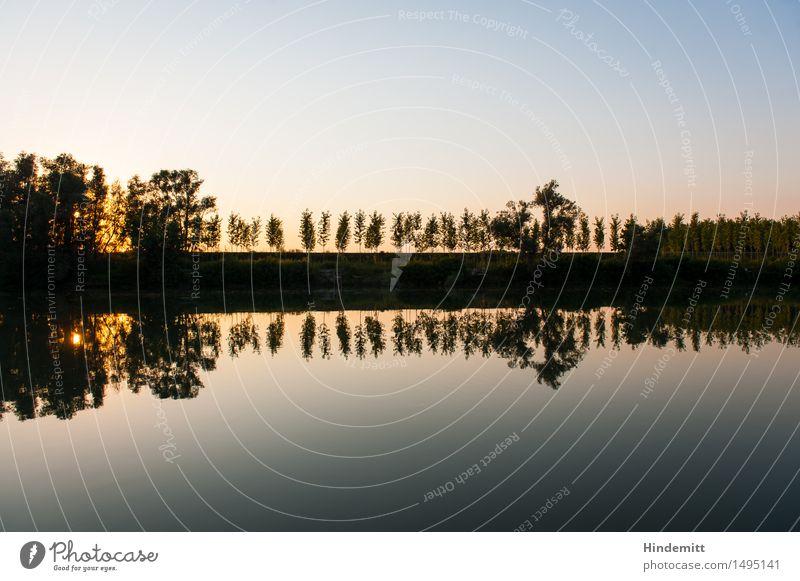 Am Po Umwelt Natur Landschaft Pflanze Luft Wasser Himmel Wolkenloser Himmel Sommer Schönes Wetter Wärme Baum Wald Flussufer Po-Delta stehen Bewegung