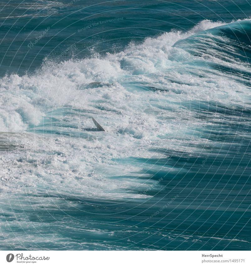 Kurz danach Ferien & Urlaub & Reisen Sommerurlaub Strand Meer Wellen Sport Sydney Stadtrand ästhetisch bedrohlich schön blau weiß Sturz Surfer Surfen Surfbrett