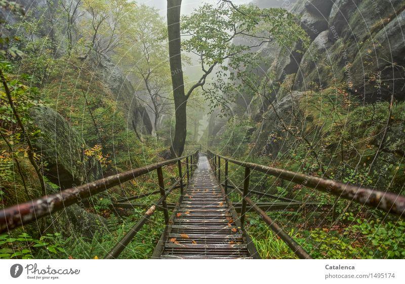 Der lange Abstieg Fitness Ausflug wandern Naturpark Elbsandstein Treppe Klettern Bergsteigen Umwelt Landschaft Pflanze Wassertropfen Herbst Klimawandel