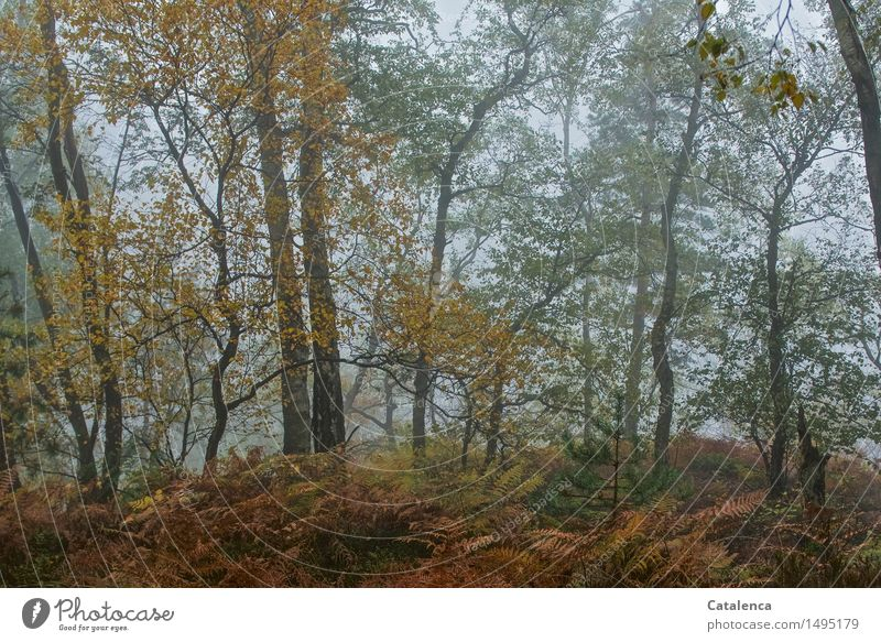 Bei Sauwetter im Wald Natur Pflanze grün Baum Landschaft Umwelt gelb Herbst Bewegung grau braun Regen orange glänzend wandern