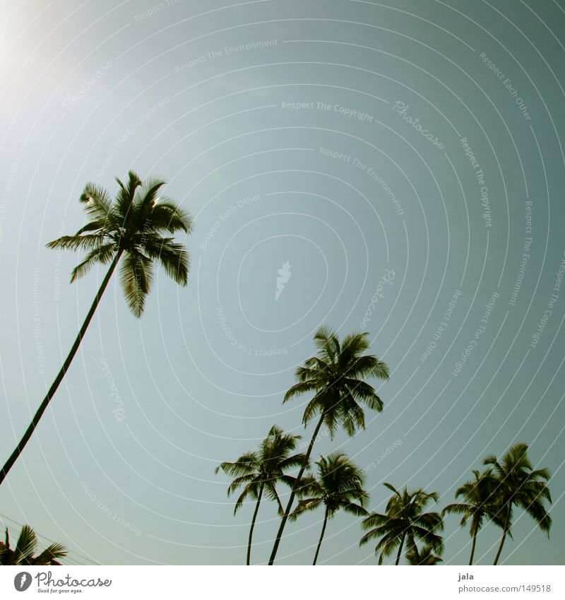 palm sky Himmel Ferien & Urlaub & Reisen blau Sommer Erholung ruhig Landschaft Reisefotografie Küste hell Luft Kraft Wind Kraft Frieden Konzentration