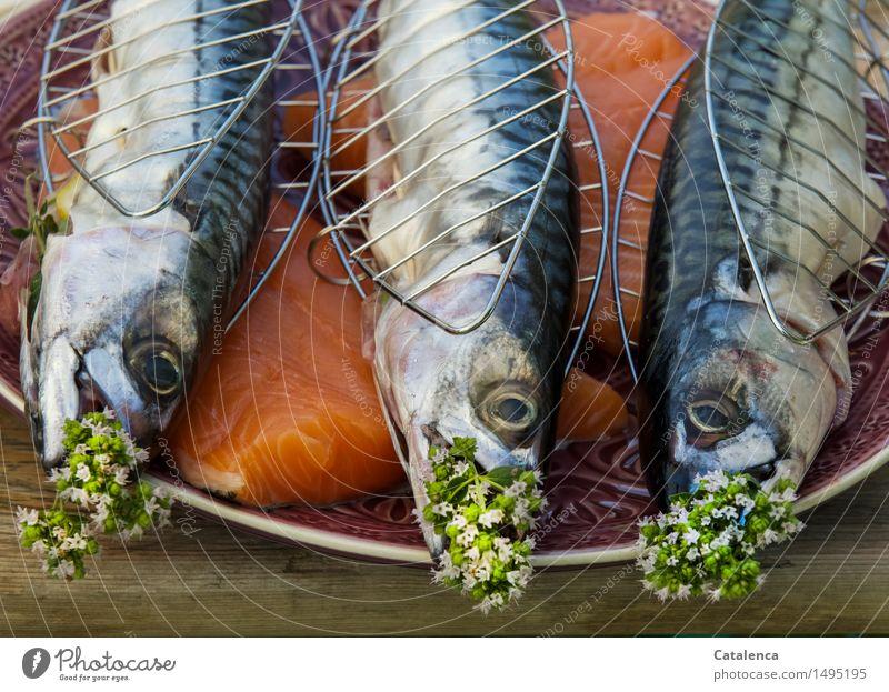 Makrelen grün Sommer Gesunde Ernährung Meer Tier Freude schwarz gelb Leben Gesundheit grau Schwimmen & Baden braun rosa orange