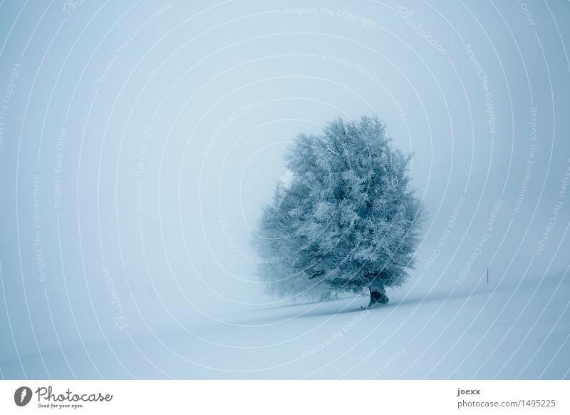 Durchhalten Natur Landschaft Winter Nebel Schnee Schneefall Baum Unendlichkeit hell schön blau grau schwarz Tapferkeit Kraft träumen Hoffnung kalt Farbfoto
