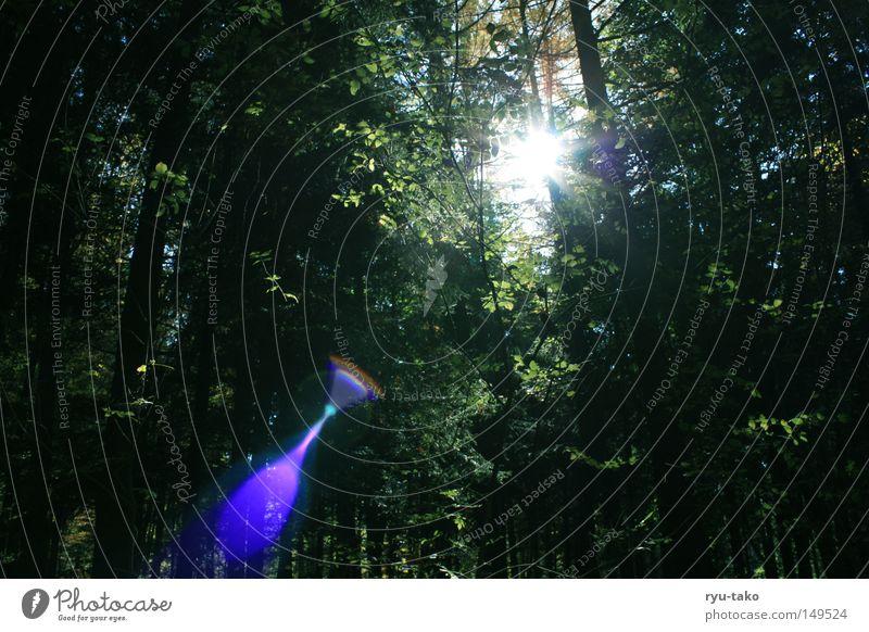 Mystica schön Baum Sonne grün blau Wald Herbst Beleuchtung mystisch Bruch traumhaft Blende wundervoll