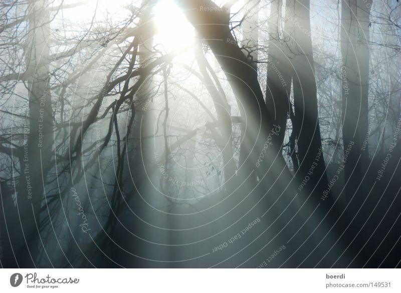 the mIst IV Natur Baum schwarz Wald dunkel kalt Herbst Landschaft grau Nebel trist Ast gruselig feucht mystisch schlechtes Wetter