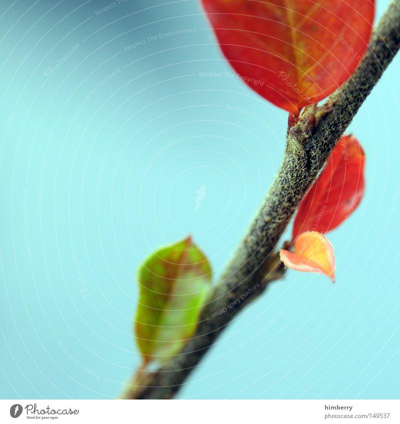 off season Herbst Ast Zweig Blatt Pflanze Jahreszeiten Herbstfärbung grün rot Baum Natur Strukturen & Formen Hintergrundbild Himmel Park Trieb Wachstum gedeihen
