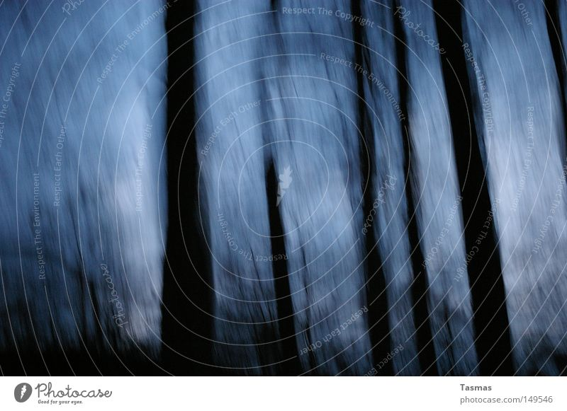 my blurry vision Wald dunkel unklar Unschärfe schwarz blau Alkoholisiert gruselig Angst Panik Verfolgung Jagd Flucht Nacht abstrakt Fantasygeschichte Phantasie