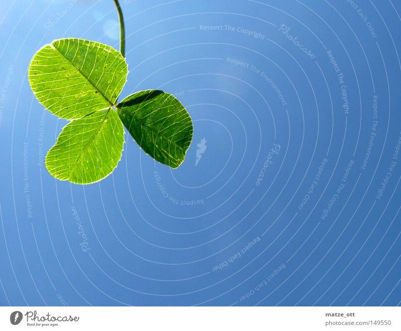 Klee Himmel grün blau Pflanze Glück zyan