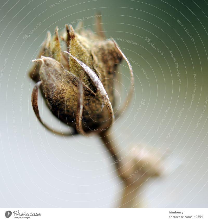 totensonntag Herbst Ast Pflanze Blatt Jahreszeiten Herbstfärbung grün Natur Blütenknospen Blattknospe Blühend Tod vergangen Vergänglichkeit trocken getrocknet