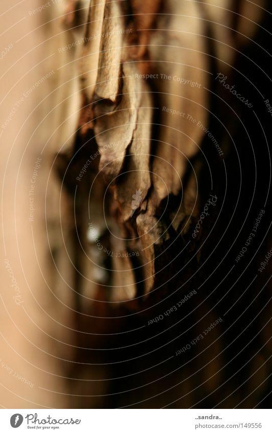 furchen Baum Holz Wachstum Vergänglichkeit Furche Baumrinde rau Maserung Holzstruktur