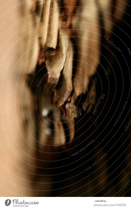 furchen Holz Holzstruktur Strukturen & Formen Maserung Baum Baumrinde Detailaufnahme rau Furche Wachstum Vergänglichkeit zerfurcht Furchen der Zeit