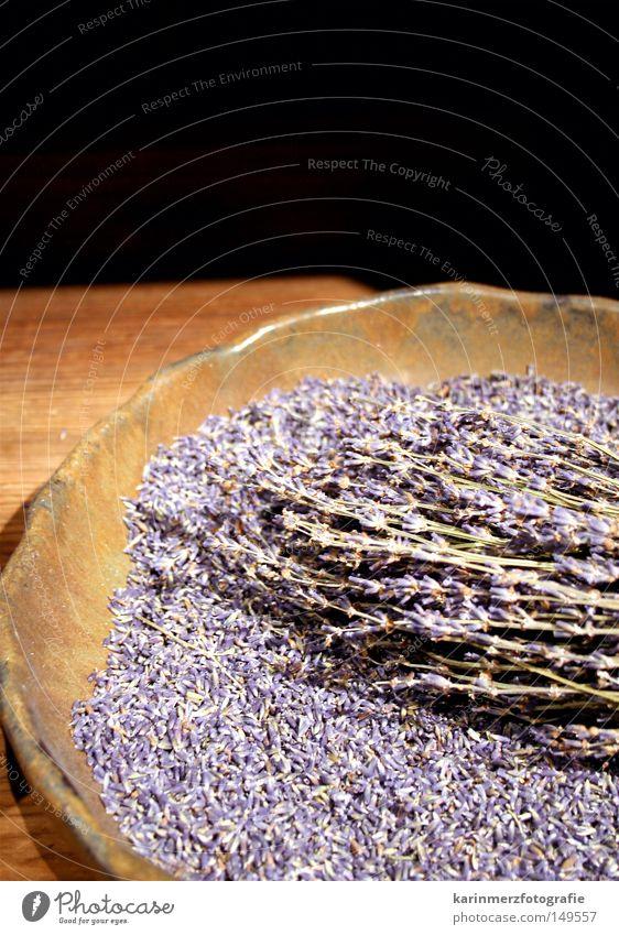 Frühlingsduft Lavendel Pflanze violett fein Duft Blüte Teller Tisch Ausstellung Blumenstrauß Nahaufnahme jüdisches Museum Heilpflanzen