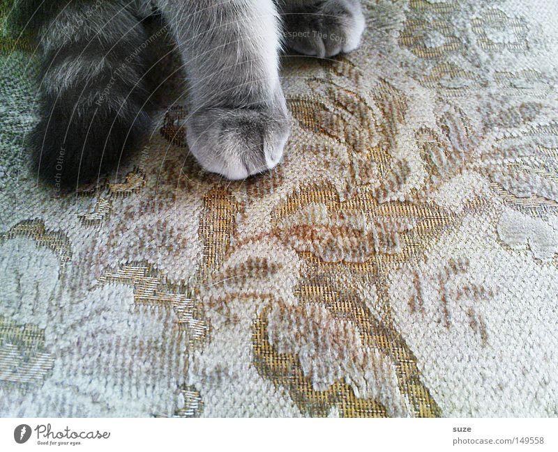 Stubentiger Sessel Stoff Fell Tier Haustier Katze Pfote 1 sitzen grau Katzenpfote Miau Schwanz Säugetier Farbfoto Gedeckte Farben Innenaufnahme Muster