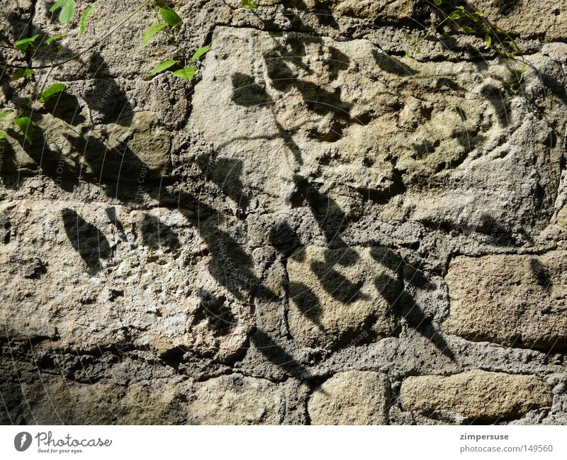 Maurermeister grün Pflanze Stein Mauer Park Klettern Ranke Efeu