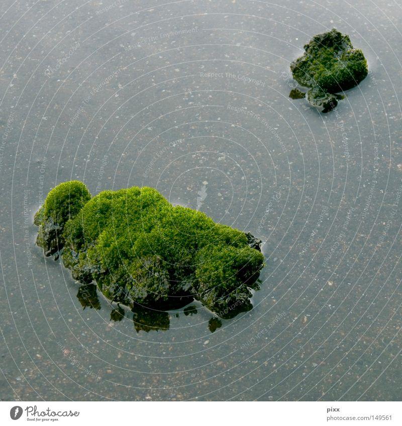 SEEgewohnheit See grün Meer klein Mikrofotografie Makroaufnahme Koloss Märchen lügen Planet Fehler Meinung Herbst Pflanze Natur groß Zwerg Urwald Klippe falsch