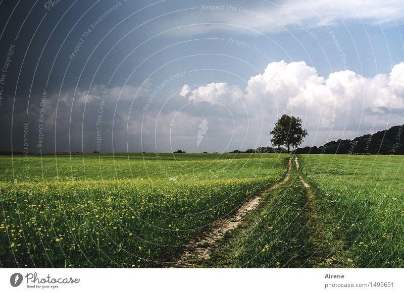 Un-Endlichkeit Himmel Wolken Gewitterwolken Unwetter Baum Gras Wiesenblume Feld Ebene Wege & Pfade Linie bedrohlich dunkel Ferne Unendlichkeit blau grün