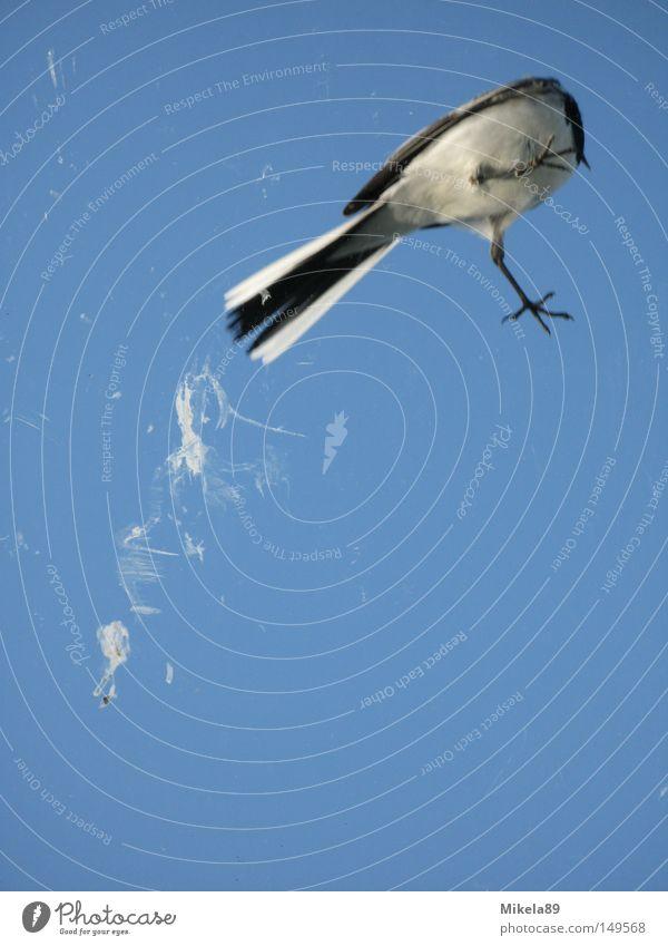 Vogelschiss in Freiheit Natur Himmel Erholung fliegen Kot befreien Befreiung