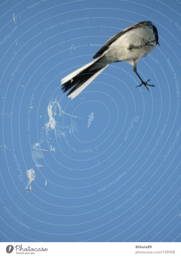 Vogelschiss in Freiheit Natur Himmel Erholung Freiheit Vogel fliegen Kot befreien Befreiung