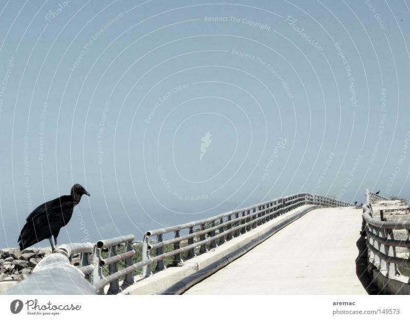 Hol's der Geier Straße Vogel Himmel Wächter Venezuela Brücke Sicherheit Wege & Pfade Geländer Bewachung