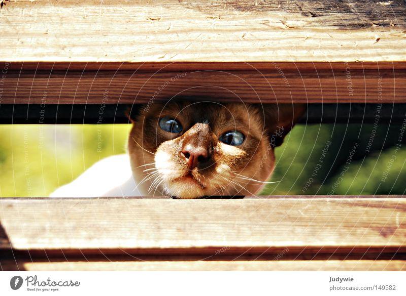 Zu eng ??? Farbfoto Tierporträt Sommer Natur Fenster Fell Katze Holz blau braun grün Angst Hauskatze stur Kopf Nase Schnurrhaar Spalte geschlossen Thailand