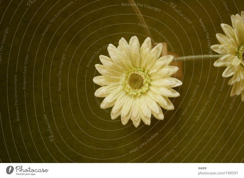 Anschnittblumen schön grün weiß Einsamkeit Blume Traurigkeit Gefühle Herbst Blüte Stil Holz Kunst elegant trist Design Dekoration & Verzierung