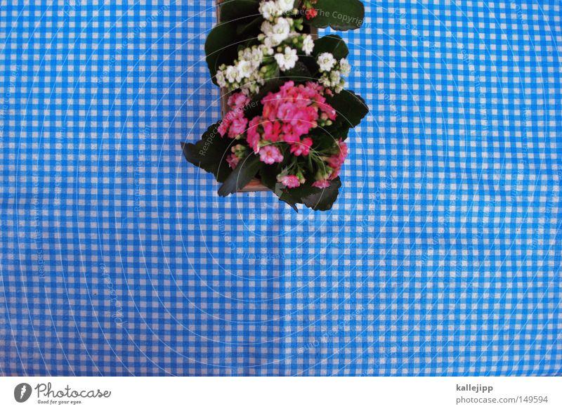 bei horst am see im hof Blume Tisch kariert rot weiß Dekoration & Verzierung Raster Rechteck Blumentopf Tischdekoration verschönern Bayern Café Restaurant