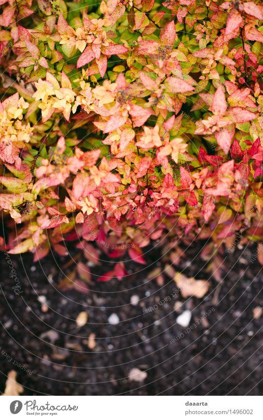 Herbstblätter Natur Ferien & Urlaub & Reisen Pflanze Erholung Blatt Freude Umwelt Leben Stil Spielen Lifestyle Garten Freiheit Sand hell