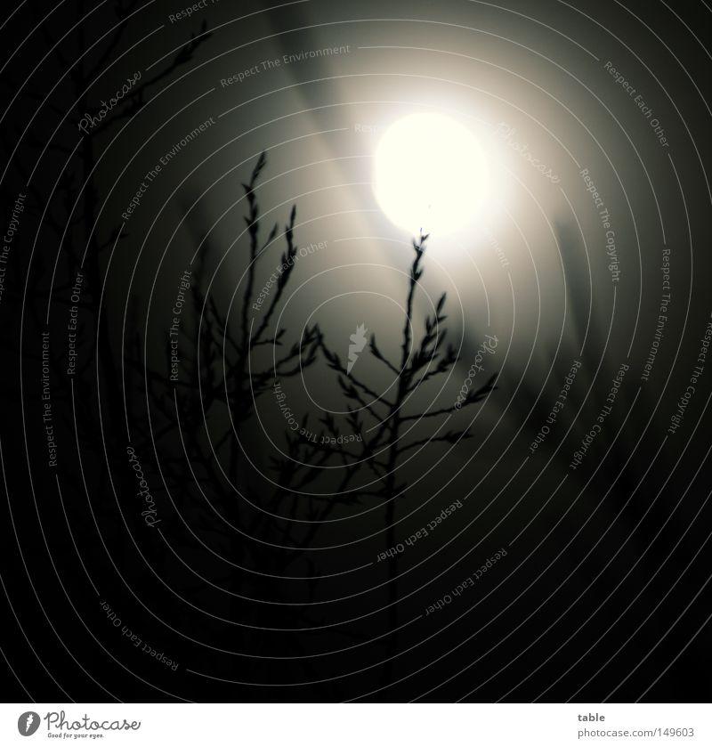 Geisterstunde Mond Vollmond Nacht Langzeitbelichtung Baum Ast Zweig Licht Lichterscheinung Mondschein dunkel Herbst Angst Panik Himmelskörper & Weltall Winter
