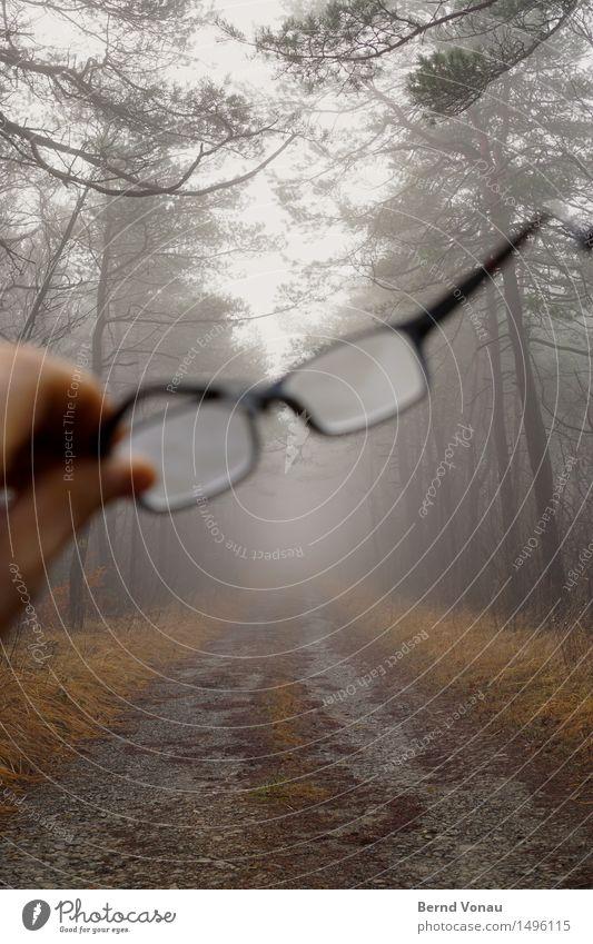 versehen Natur Baum Hand Gefühle Herbst Gras grau Nebel Glas Fußweg Brille Spaziergang durchsichtig trüb Kies Gestell