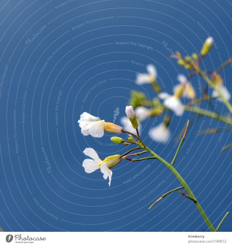 blue monday Natur Pflanze schön Farbe Sommer Blume Frühling Blüte Hintergrundbild Park Wachstum frisch authentisch ästhetisch Vergänglichkeit Hoffnung