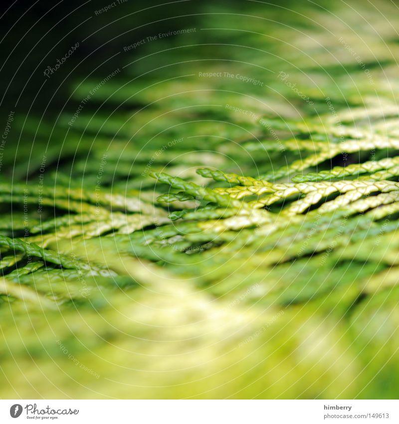 grüne welle Natur grün Baum Erholung ruhig Umwelt Frühling Luft Park Wildtier Wachstum Frieden Weihnachtsbaum Zweig Duft Tanne