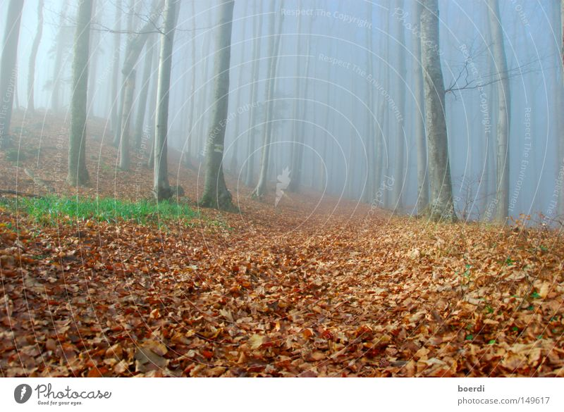oRientierung Natur Baum grün blau ruhig Blatt schwarz Wald dunkel kalt Herbst grau Wege & Pfade Landschaft Angst Nebel