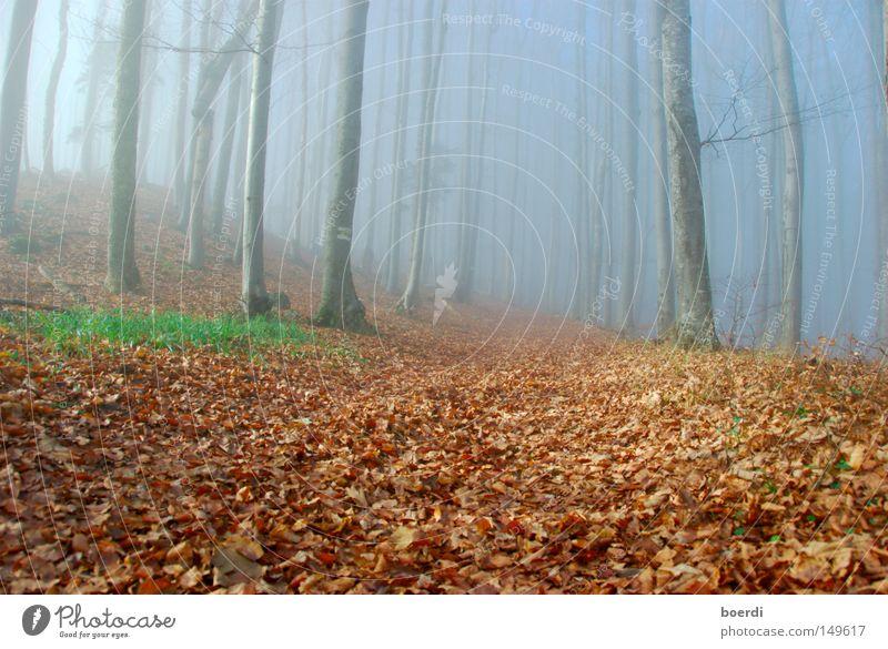oRientierung Wald Nebel Baum Natur Landschaft mystisch aufregend feucht dunkel Herbst September Oktober morsch November kalt trist schlechtes Wetter Hexe