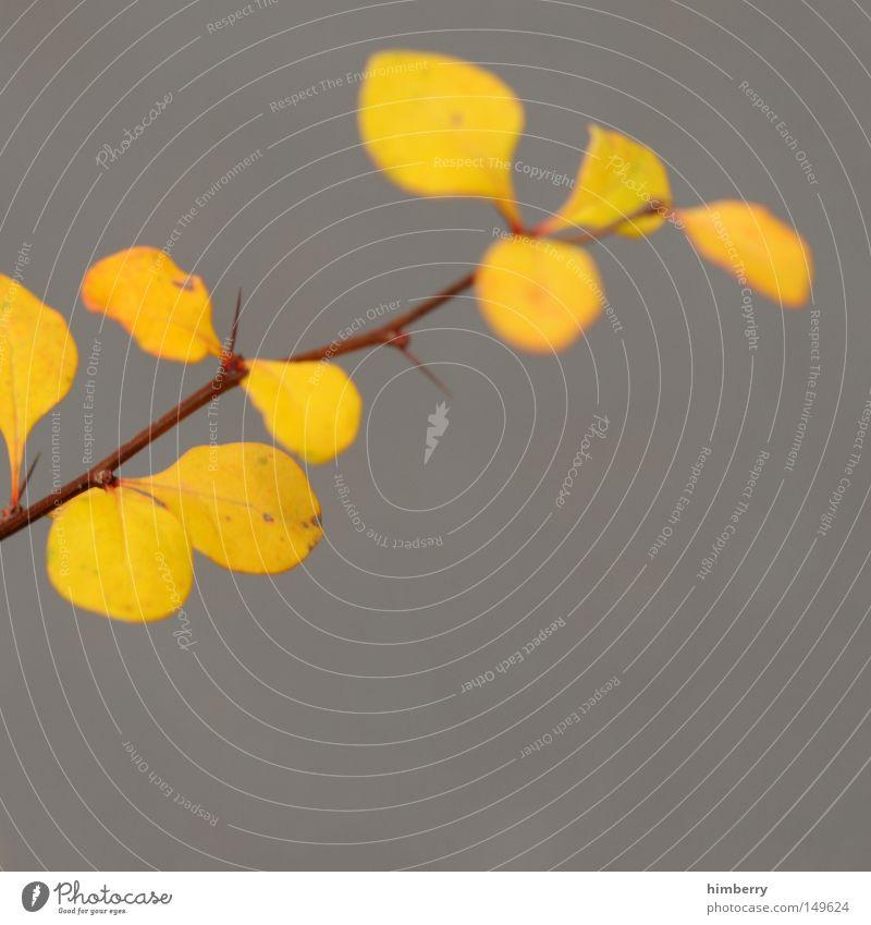 unsharp colors Herbst Blatt Jahreszeiten Herbstfärbung grün gelb Baum gold Natur Strukturen & Formen Hintergrundbild Himmel Park Makroaufnahme Nahaufnahme
