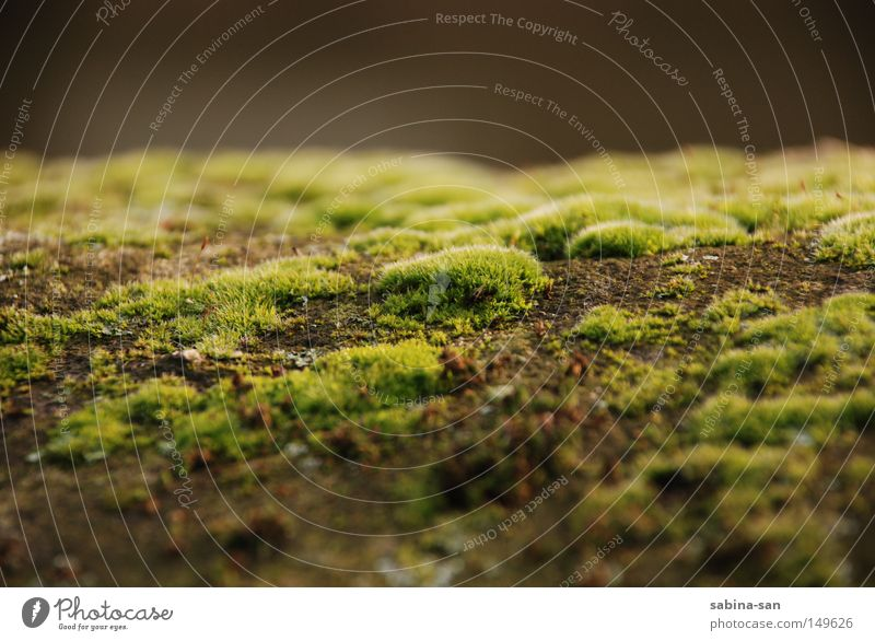 Moostag grün Dämmerung Mauer verfaulen vermodern Märchen Natur Pflanze Herbst Makroaufnahme Nahaufnahme verwachsen